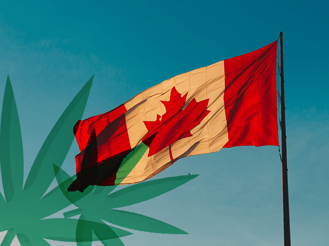 How are Canadian startups embracing the cannabis opportunity? Boldly.